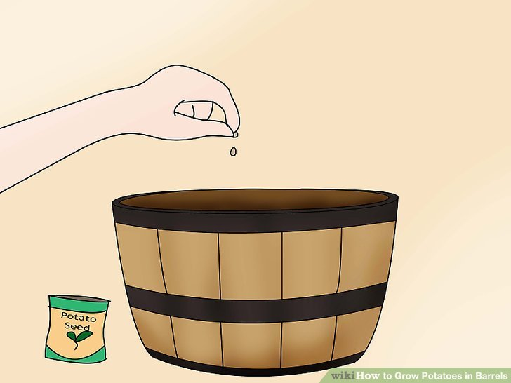 Image titled Grow Potatoes in Barrels Step 4