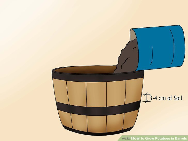 Image titled Grow Potatoes in Barrels Step 5