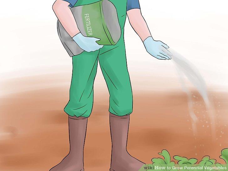 آموزش کاشت سبزیجات چند ساله مرحله 10