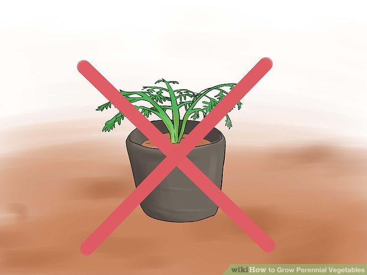 آموزش کاشت سبزیجات چند ساله مرحله 13