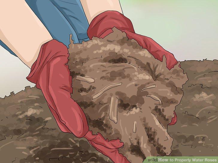 آموزش آبیاری مناسب گل رز مرحله 10
