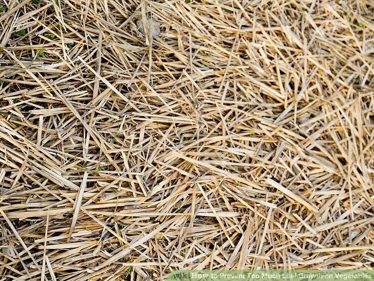 آموزش جلوگيري از رشد بيش از حد برگ سبزيجات مرحله 3