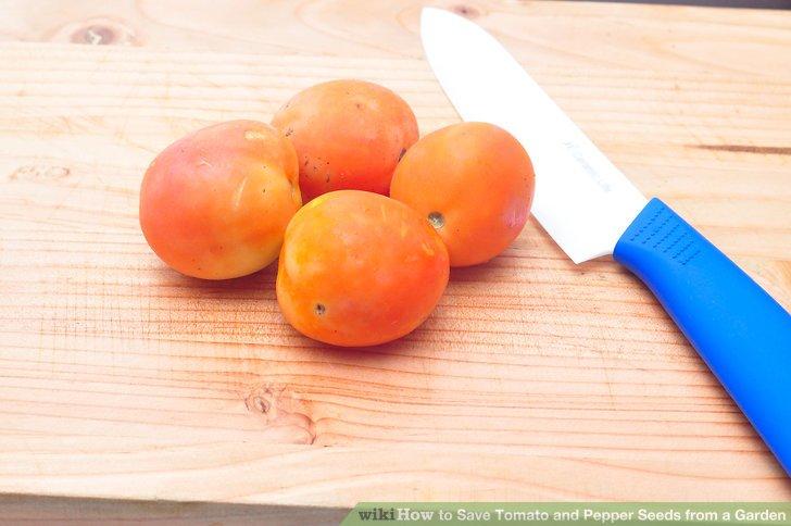 روش بذرگیری گوجه فرنگی و فلفل مرحله 1