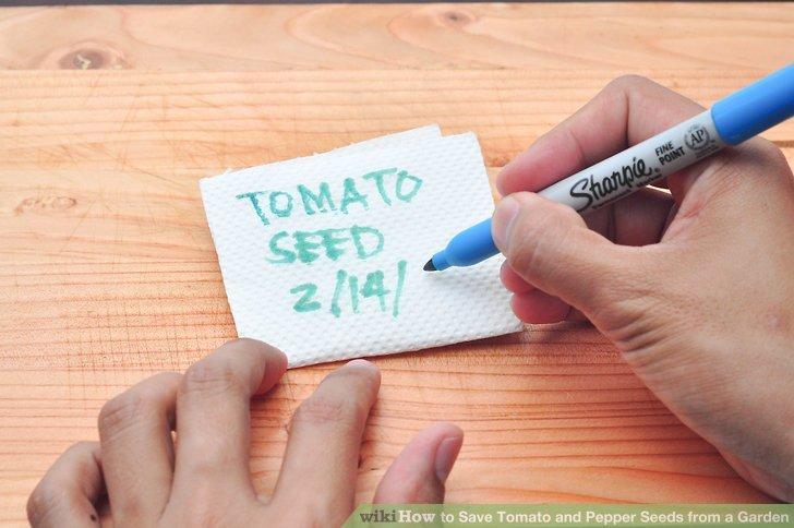 روش بذرگیری گوجه فرنگی و فلفل مرحله 5