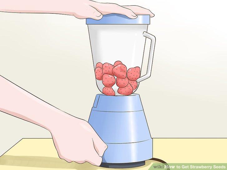 آموزش تولید بذر توت فرنگی مرحله 1