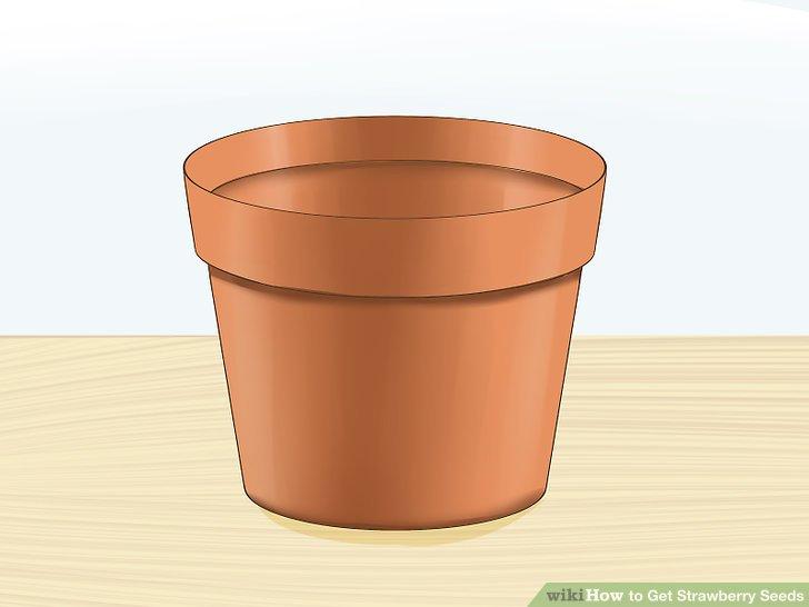 آموزش تولید بذر توت فرنگی مرحله 9