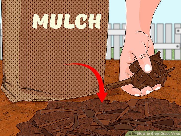 Image titled Prevent Soil Erosion Step 2