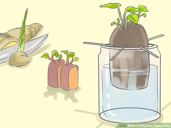 آموزش کاشت مجدد سبزيجات مرحله 17