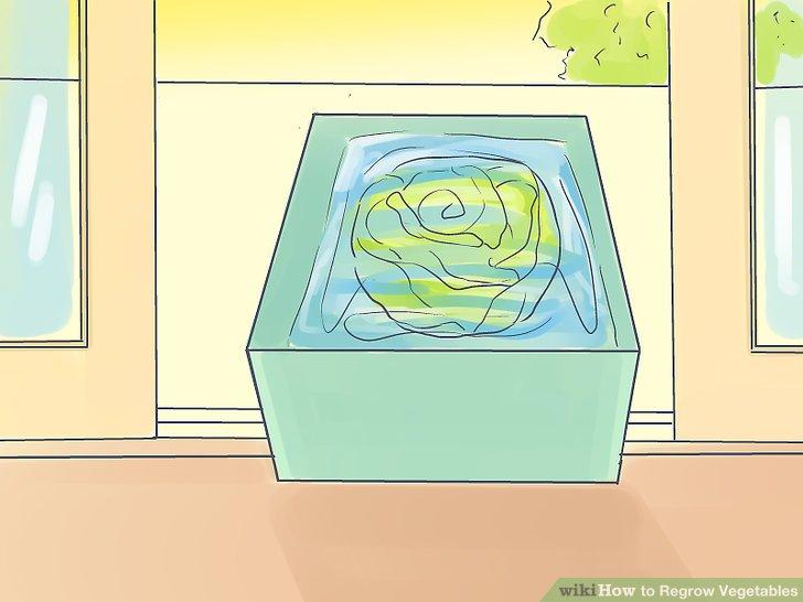 آموزش کاشت مجدد سبزيجات مرحله 3