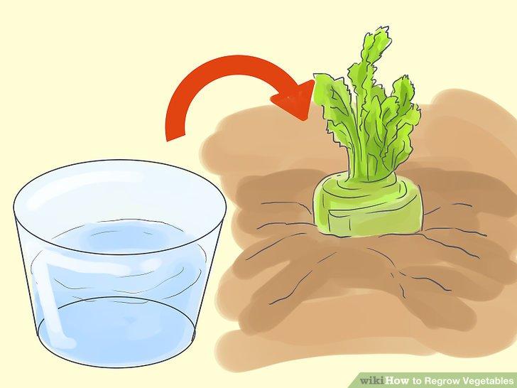 آموزش کاشت مجدد سبزيجات مرحله 5
