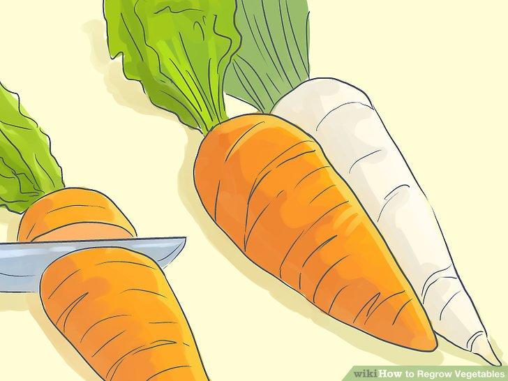 آموزش کاشت مجدد سبزيجات مرحله 7