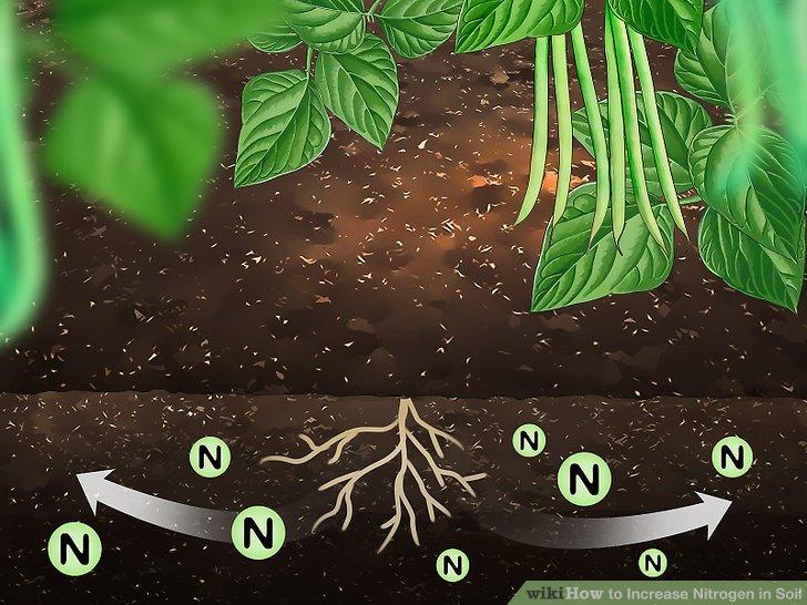 Image titled Increase Nitrogen in Soil Step 1