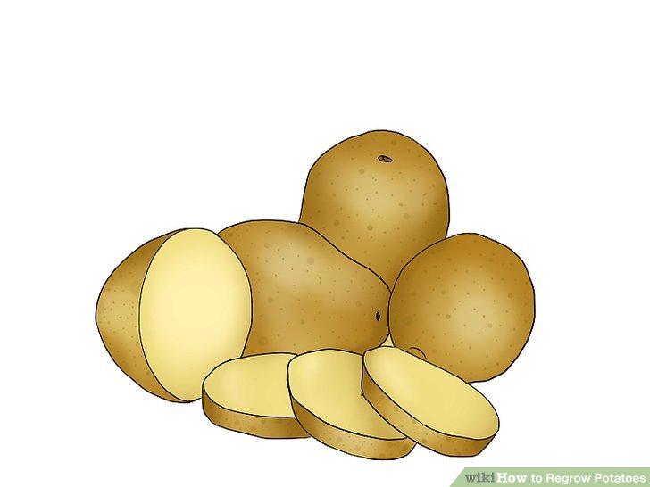 Image titled Grow Sweet Potatoes Step 2