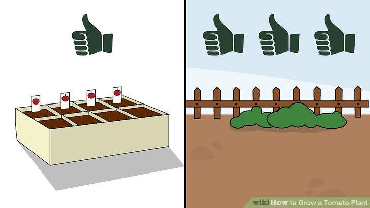 آموزش کاشت گوجه فرنگي مرحله 1