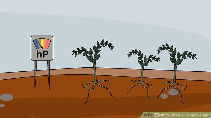 آموزش کاشت گوجه فرنگي مرحله 12