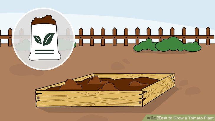 آموزش کاشت گوجه فرنگي مرحله 14