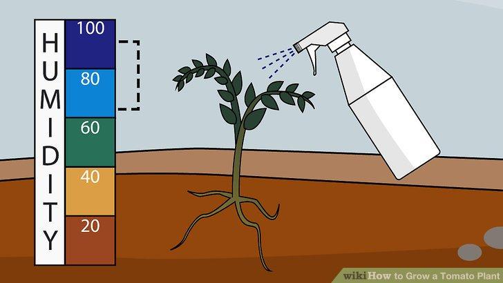 آموزش کاشت گوجه فرنگي مرحله 18