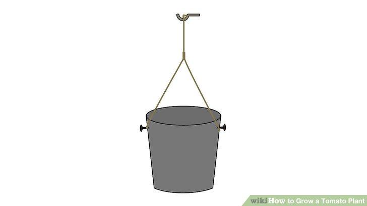 آموزش کاشت گوجه فرنگي مرحله 5