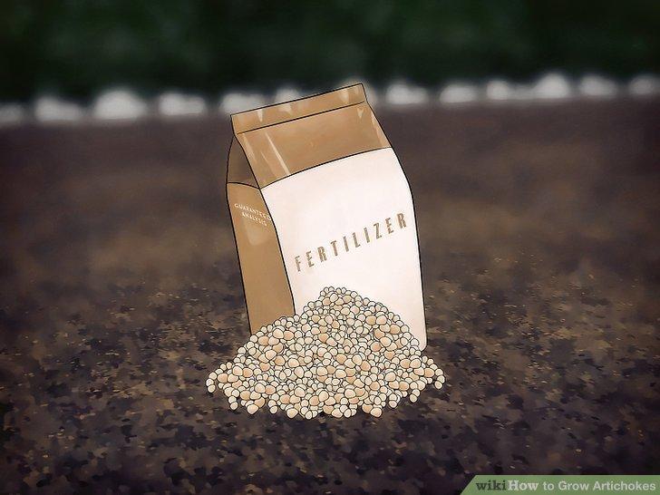 Image titled Grow Artichokes Step 8