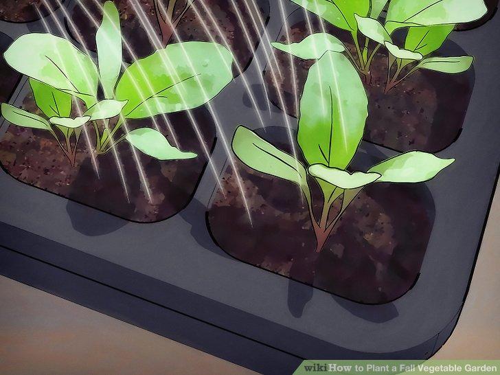 آموزش ايجاد باغ سبزيجات پاييزه مرحله 10