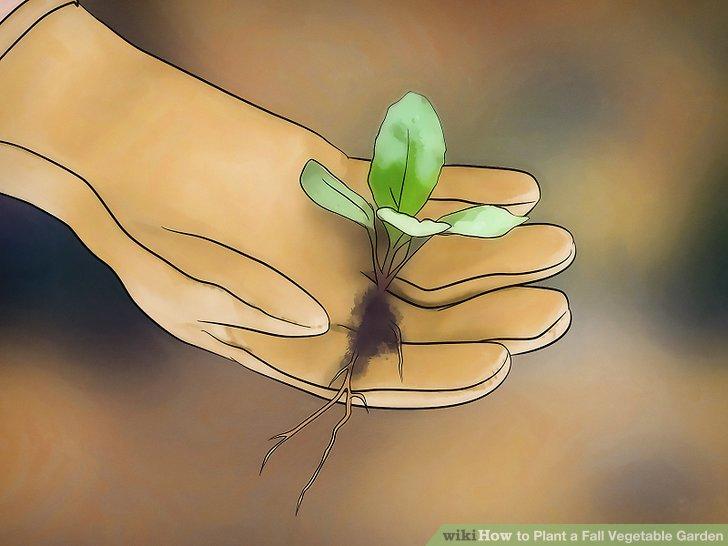 آموزش ايجاد باغ سبزيجات پاييزه مرحله 12