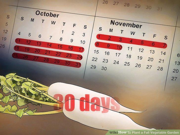 آموزش ايجاد باغ سبزيجات پاييزه مرحله 4