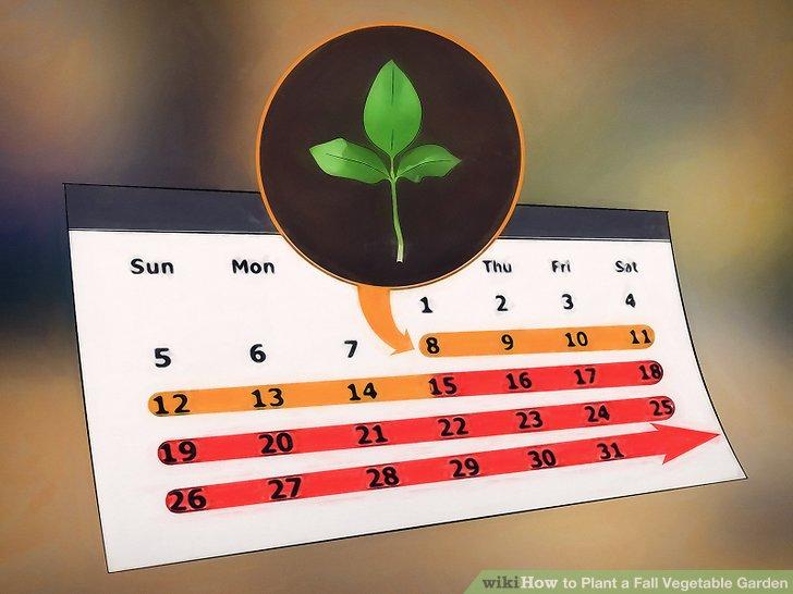 آموزش ايجاد باغ سبزيجات پاييزه مرحله 5