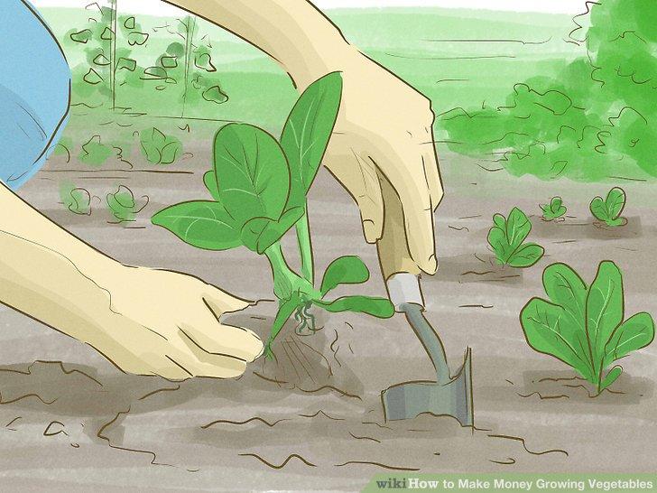 آموزش کسب درآمد با کشت سبزیجات مرحله 2