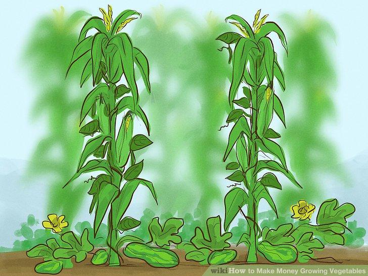 آموزش کسب درآمد با کشت سبزیجات مرحله 3