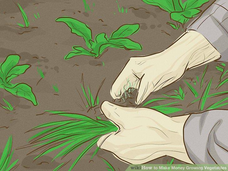 آموزش کسب درآمد با کشت سبزیجات مرحله 5