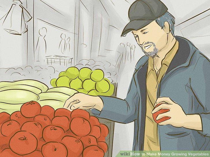 آموزش کسب درآمد با کشت سبزیجات مرحله 6