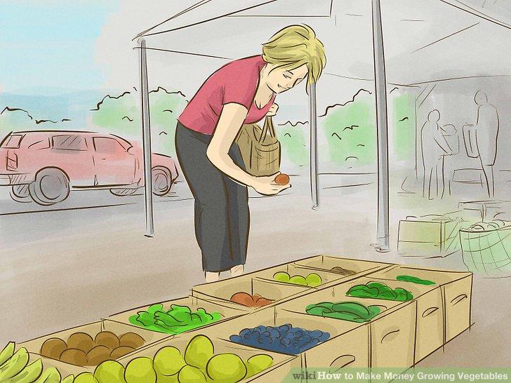 آموزش کسب درآمد با کشت سبزیجات مرحله 8