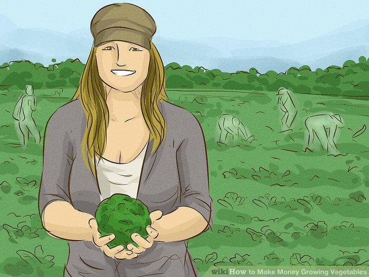 آموزش کسب درآمد با کشت سبزیجات مرحله 9