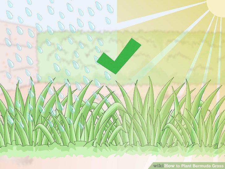 Image titled Plant Bermuda Grass Step 1
