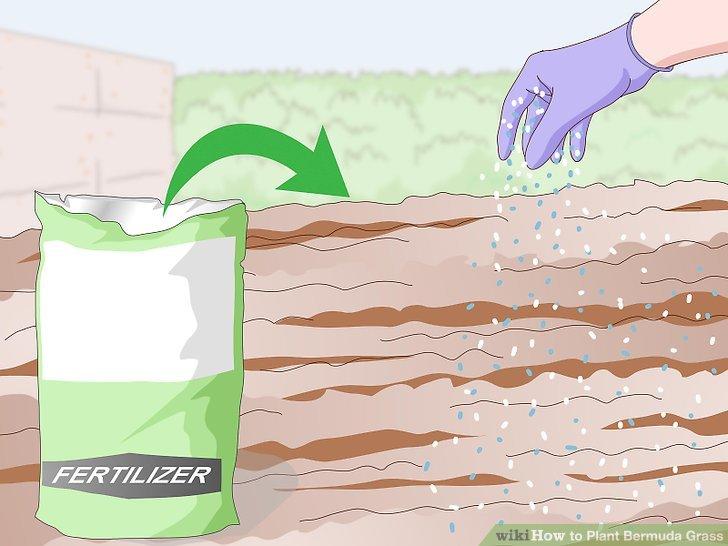 Image titled Plant Bermuda Grass Step 10