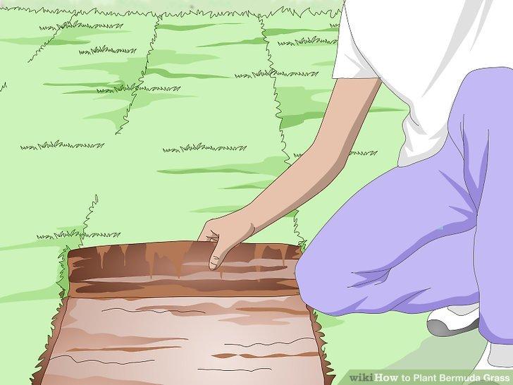 Image titled Plant Bermuda Grass Step 15