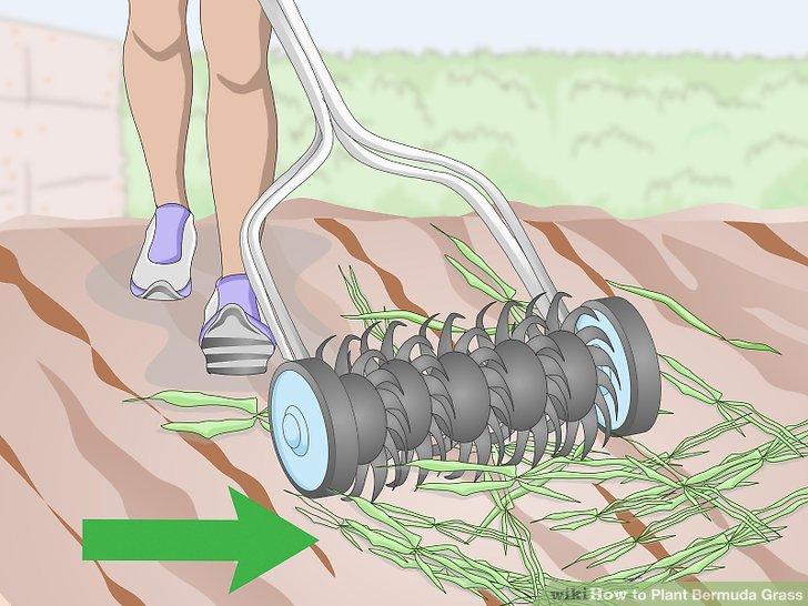 Image titled Plant Bermuda Grass Step 2