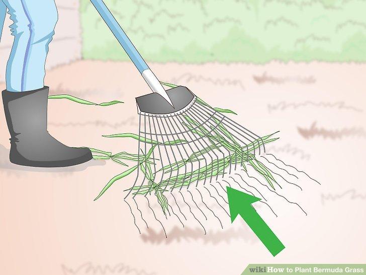 Image titled Plant Bermuda Grass Step 3